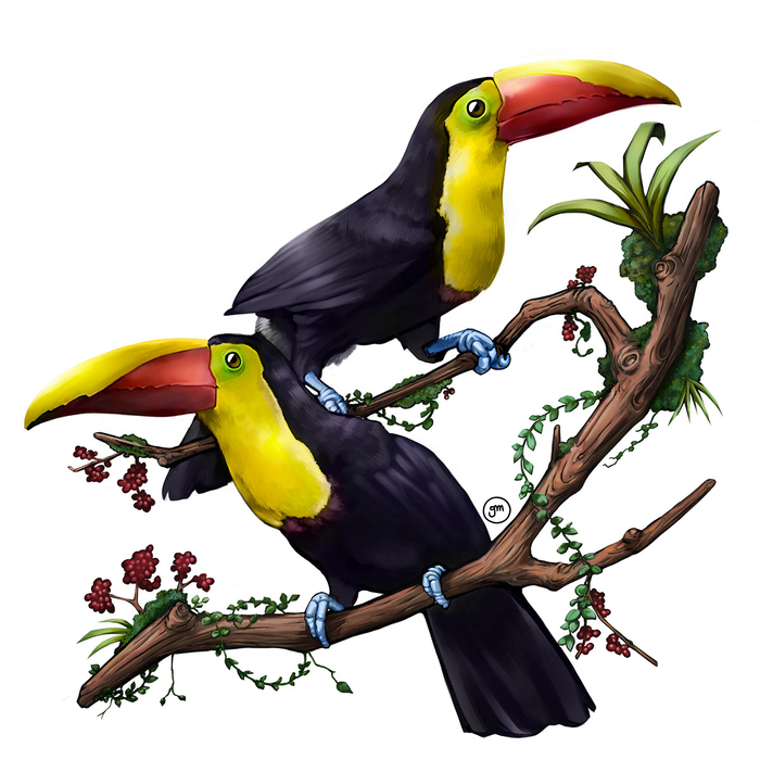 Digital painting of two Yellow-throated Toucans